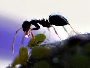 Как использовать Домового в борьбе с тараканами