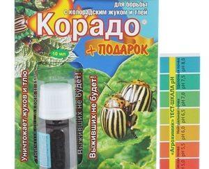 Как правильно примененять Корадо против колорадского жука?