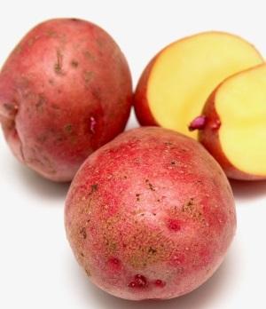Характеристики побега картофеля сорта Каменский