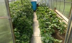 Чем обработать растения от паутинного клеща