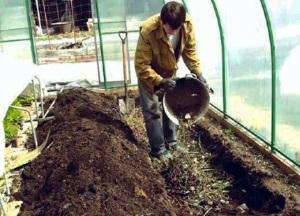 Что такое нематоды в огороде