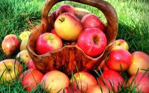 Хранение яблок на зиму