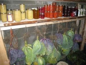 Хранение капусты в погребе