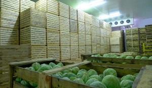 Оптимальные условия для капусты в хранилище