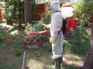 Борьба с муравьями на садовом участке