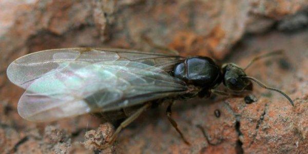 Как размножаются и развиваются муравьи: продолжительность жизни и особенности строения самца и самки муравья