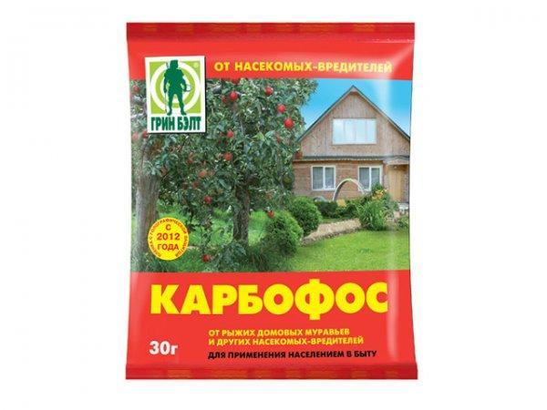 Как избавиться от муравьев народными средствами в доме и огороде