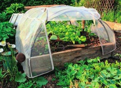 Выращивание синих баклажанов в теплице для бизнеса