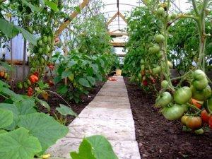 Какие культуры можно выращивать в одной теплице
