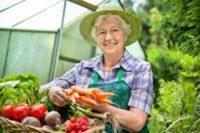 Что можно выращивать в теплице зимой – зеленые витамины круглый год