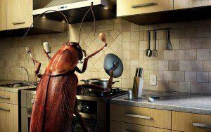 Черные тараканы – как распознать и уничтожить?