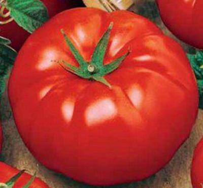 Что такое биф томаты, сорт помидор бифштекс