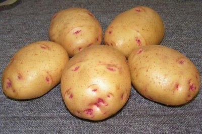 картофель пикассо описание сорта фото