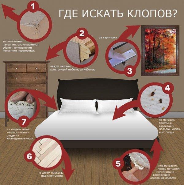 откуда берутся клопы постельные в квартире