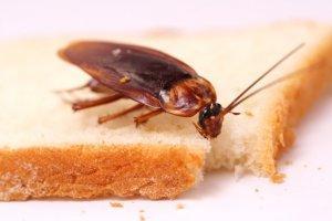 Что делать если появились тараканы на кухне