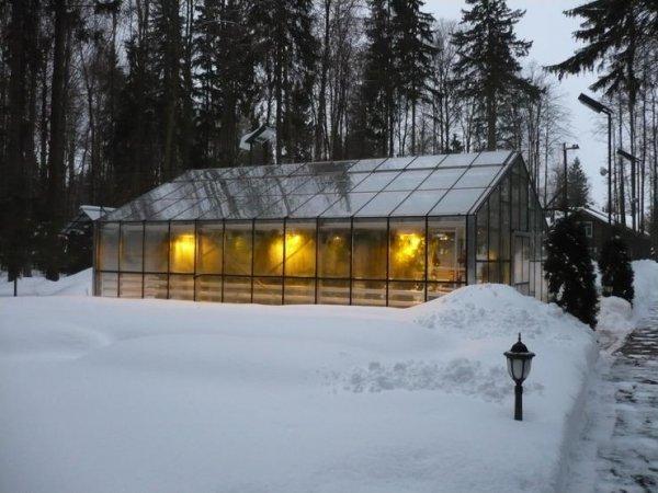Освещение для огурцов в теплице зимой