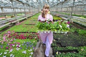 Какие цветы лучше выращивать в теплице
