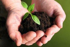 Грунт для перцев: для рассады и земля на огороде, идеальный состав, подготовка для посева семян и высадки окрепших саженцев