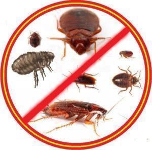 Борная кислота в жидком виде от тараканов