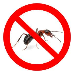 Как использовать борную кислоту от тараканов