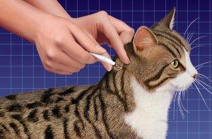Капли Адвокат для кошек инструкция к применению при борьбе со блохами