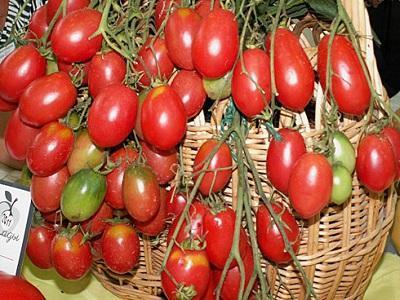сорт томата розовый изюм