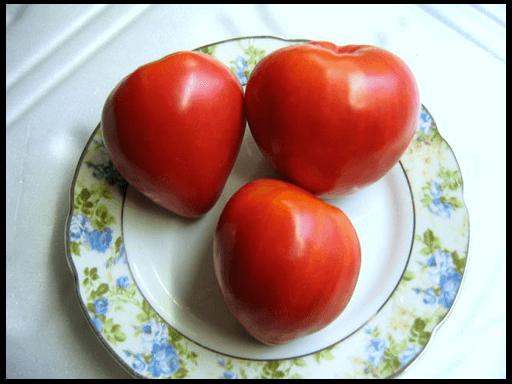 Томат - Мазарини: характеристика и описание сорта, рекомендации по выращиванию и фото помидоров