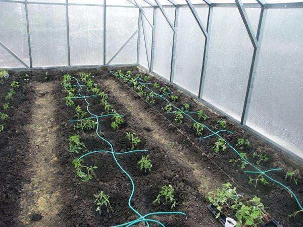 Экономия воды и защита растений: все это — система капельного полива для теплиц своими руками (как сделать и организовать автоматическое орошение, схема)
