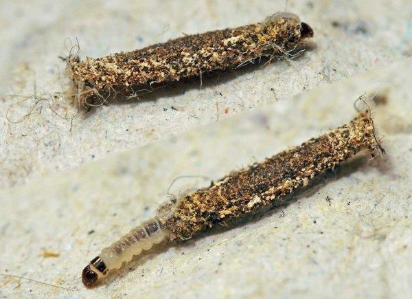 Чем убить личинки моли в шубе