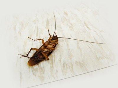 Как можно бороться с тараканами