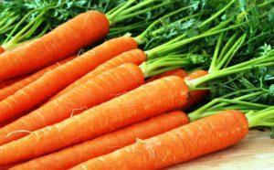 Посадка моркови семенами в открытый грунт Уход за морковью Выращивание моркови Когда сажать
