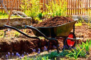 Хурма: выращивание и уход, выбор посадочного материала. Как успешно вырастить хурму в своём саду или дома, даже из обычной косточки - Автор Екатерина Данилова