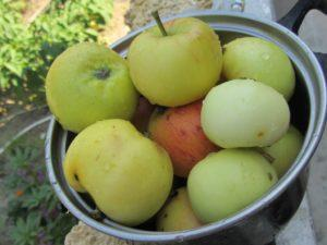 Капуста квашеная с морковью и яблоками