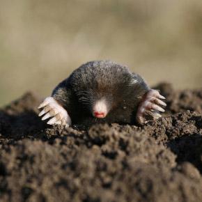 Почему муравьиная матка не откладывает яйца