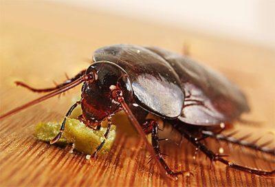 Где прячутся тараканы в квартире, подъезде и подвале