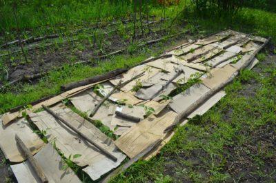 Посадка и выращивание картофеля под соломой или сеном: методика и технология