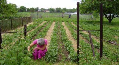Производство картофеля в мире по странам
