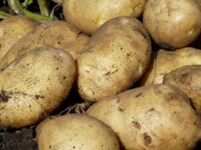 Сок картофеля полезные свойства и противопоказания картофель