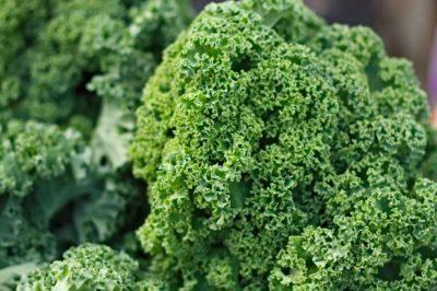 Описание и характеристика сорта капусты Кейл