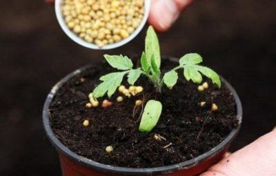 Какие калийные удобрения подходят для томатов и как их применять