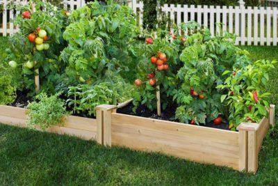 Готовим землю для рассады помидор