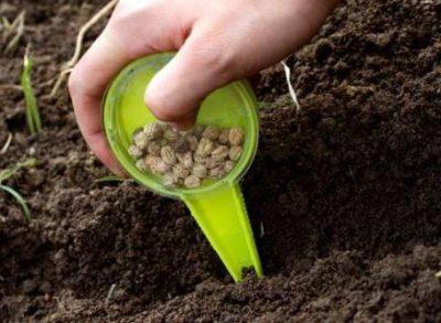Как выращивать хрен на огороде