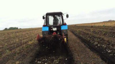 Топинамбур: выращивание и посадка в открытом грунте, чем полезны клубни