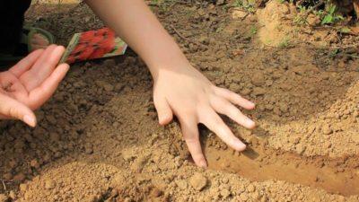 Когда сажать редиску весной в открытый грунт