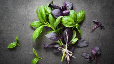 Трава базилик польза и вред
