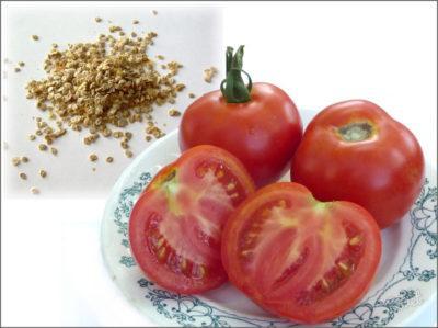 Томаты особенности выращивания из семян