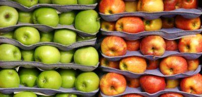 Способы хранения яблок на зиму