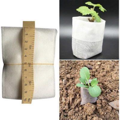 Как посадить семечко помидора