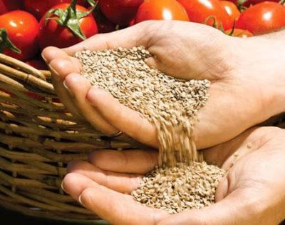 Закаливание семян и обработка в растворах микроэлементов