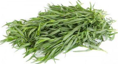 Как вырастить тархун на своем огороде
